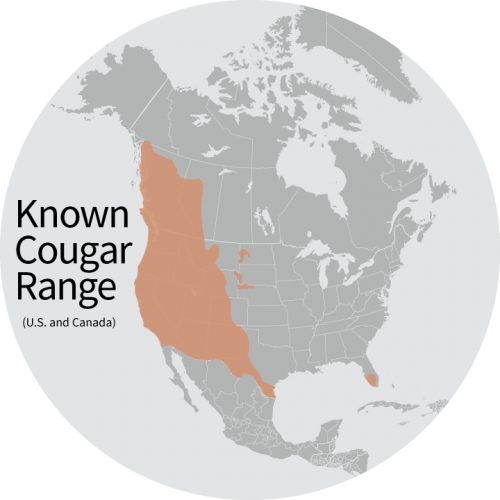 Cougar Range In United States  Video Search Engine At